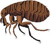Rat clipart flea #10