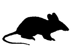 Rat clipart halloween #2