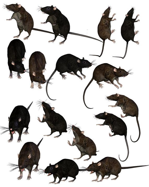 Rat clipart halloween #5