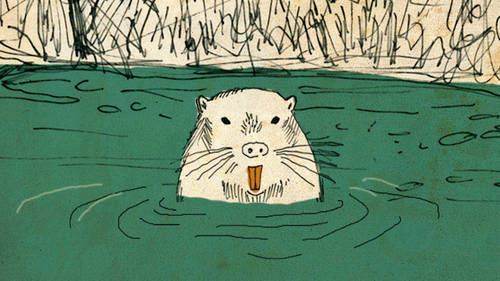 Rat clipart nutria #14