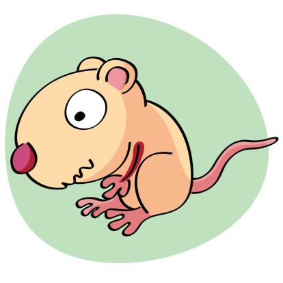 Rat clipart nutria #9