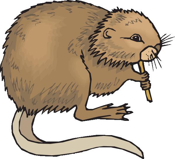 Rat clipart nutria #8