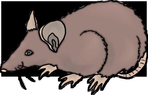 Rat clipart public domain #5