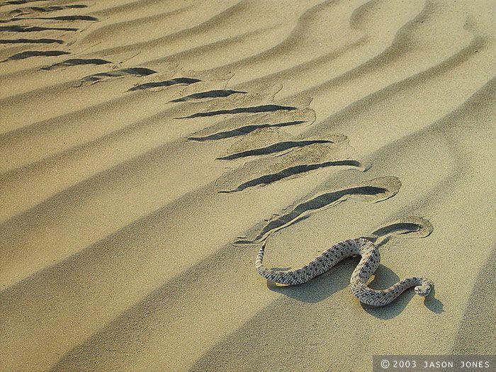 Rattlesnake clipart desert snake #11