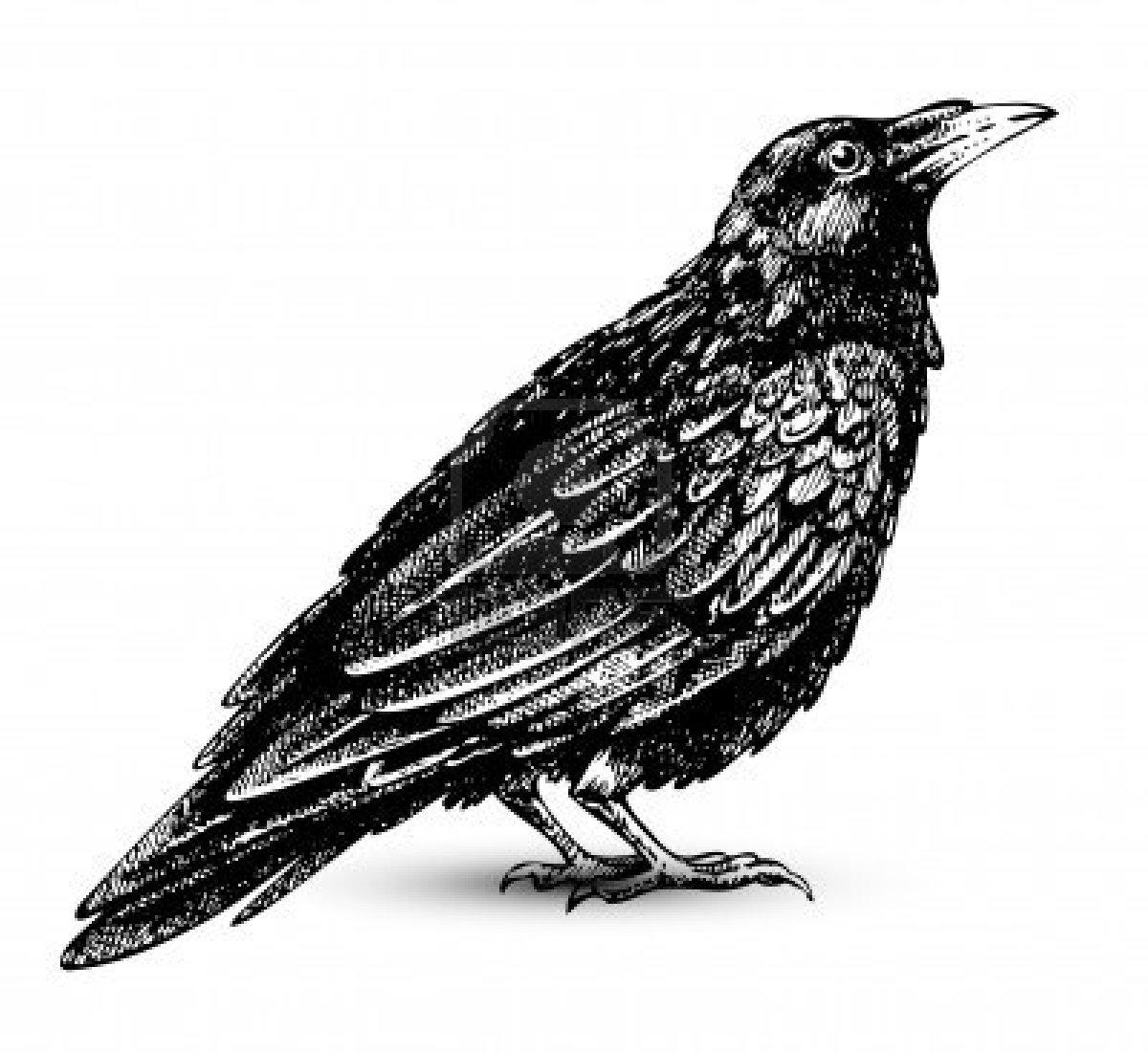 Raven clipart clipart poe #5