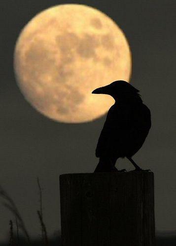 Raven clipart halloween full moon #9