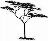 Realistic clipart acacia tree #11