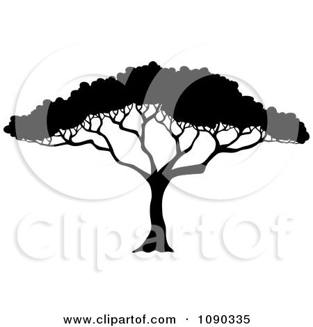 Realistic clipart acacia tree #7