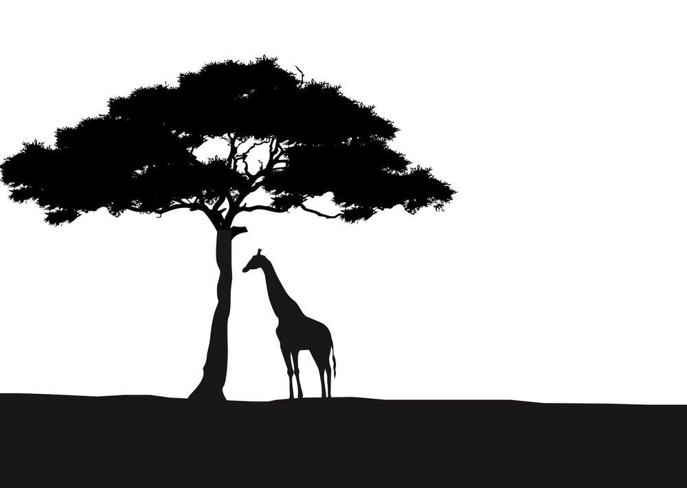 Africa clipart african safari Giraffe Wall African Acacia