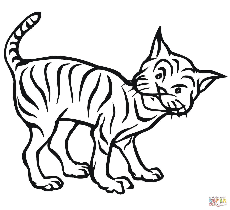 Bobcat clipart realistic Bobcat Curious coloring Free Coloring