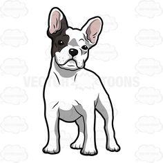 Realistic clipart bulldog #7