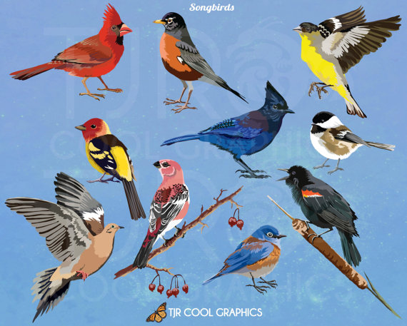 Bluebird clipart songbird Commercial Blackbird Robin on JoyCreating