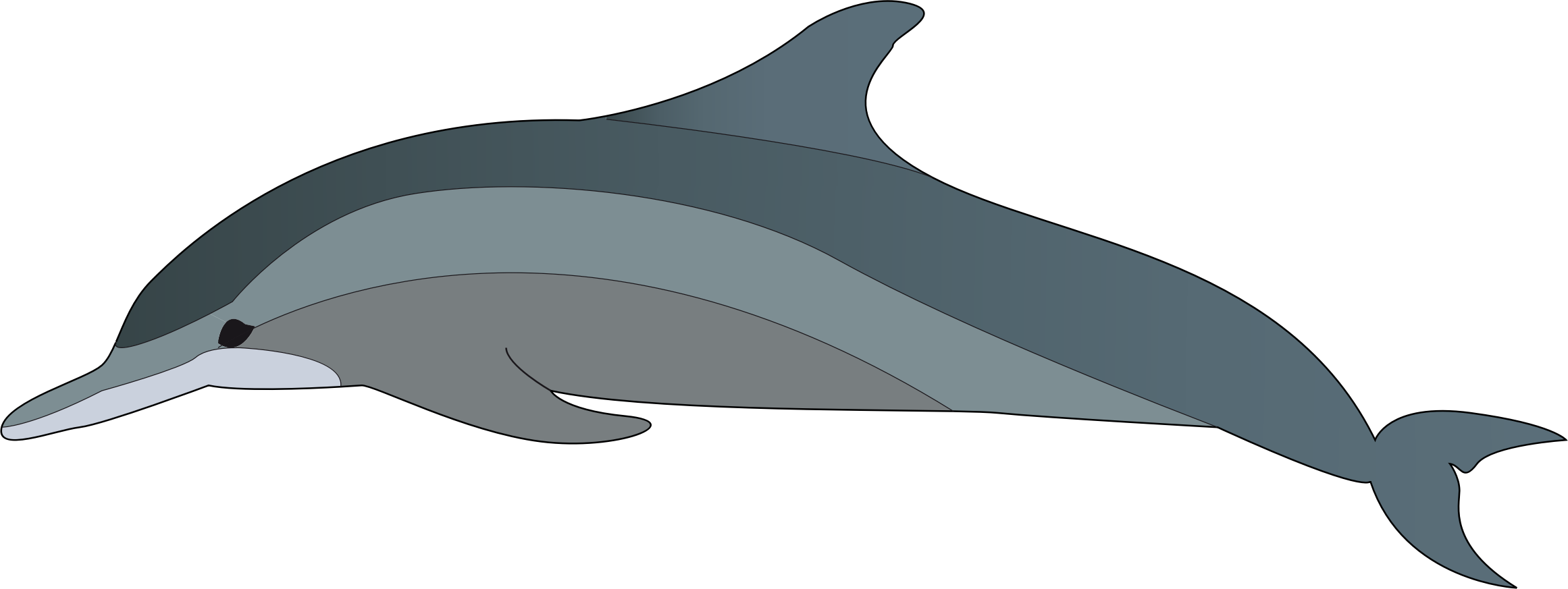 Bottlenose Dolphin clipart nosed Clipart of collection dolphin Clipart
