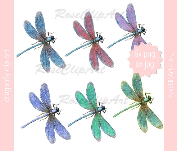 Realistic clipart dragonfly #10