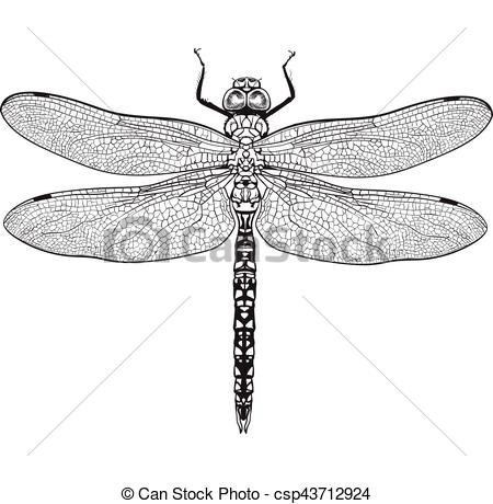 Realistic clipart dragonfly #11