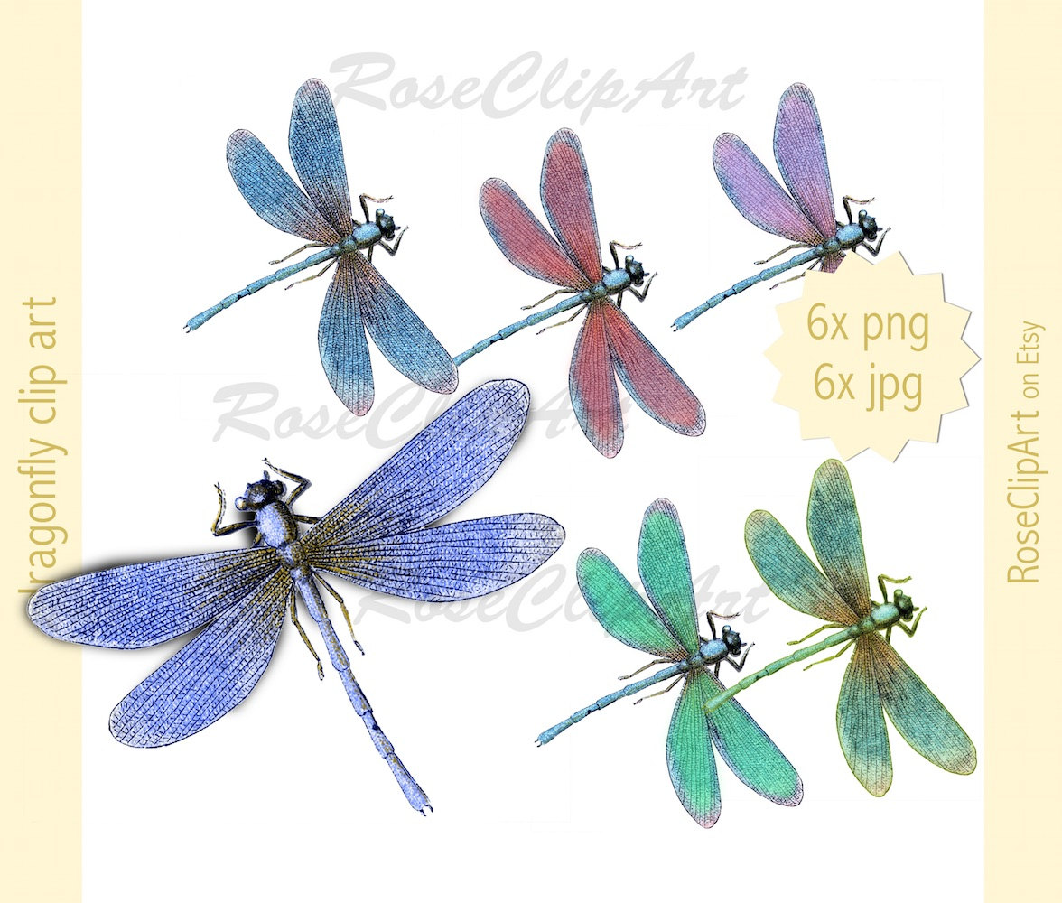Realistic clipart dragonfly #9