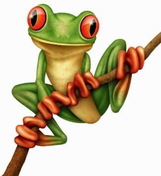 Red Eyed Tree Frog clipart realistic #1