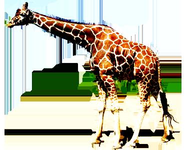 Realistic clipart giraffe #14