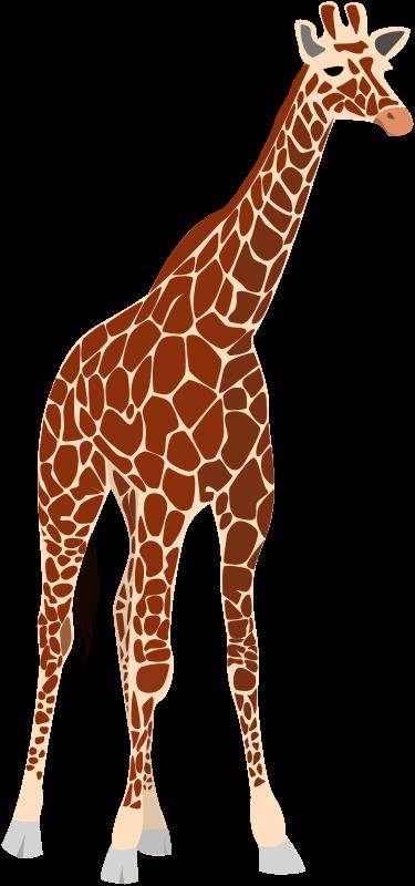 Realistic clipart giraffe #9