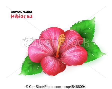 Tropics clipart bloom #1