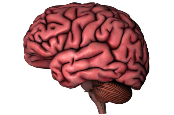 Realistic clipart human brain #9