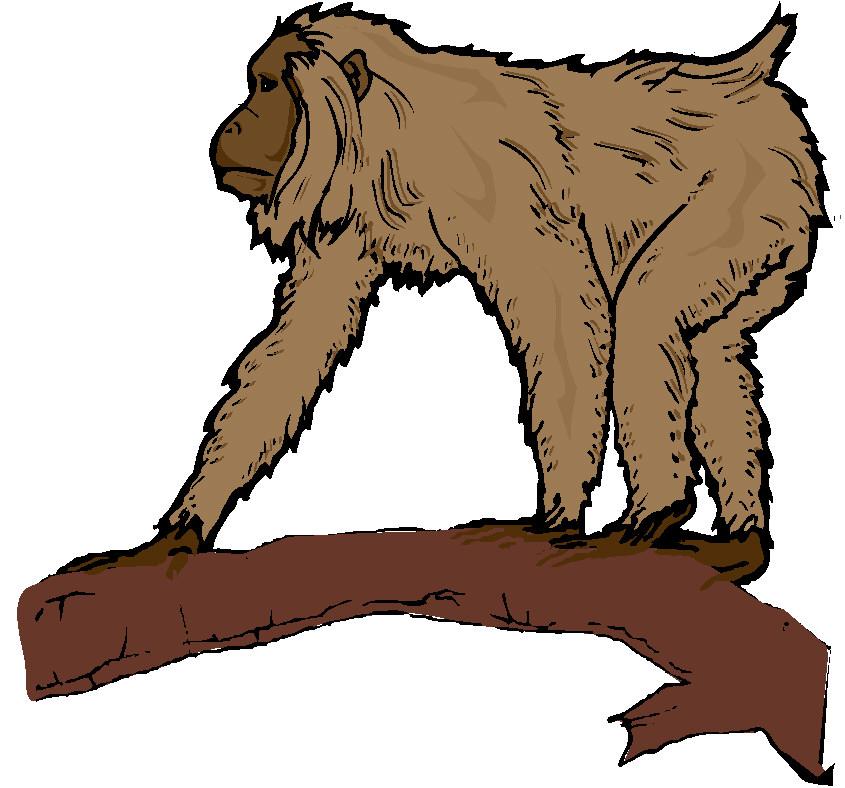 Baboon clipart moneky Clip Monkey Clipart Animal ClipartIO