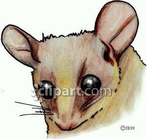 Realistic clipart rat #10