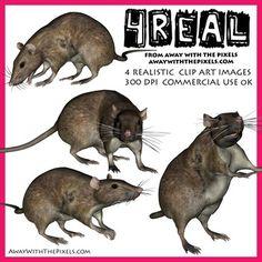 Realistic clipart rat #9