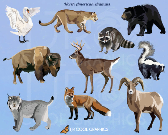 Realistic clipart realistic animal #12