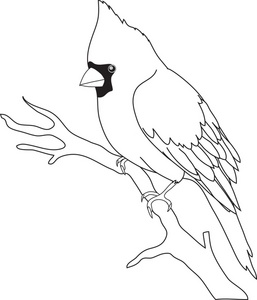 Parrot clipart tree drawing Outline a  white Black