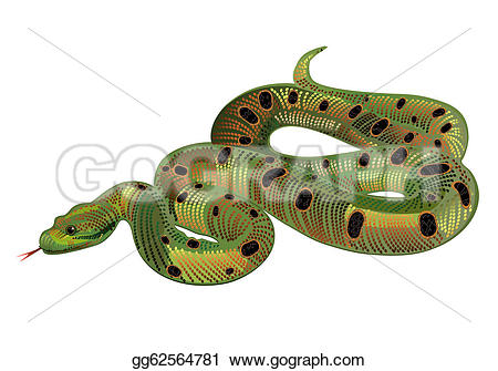 Boa Constrictor clipart viper Green Drawing Drawing green gg62564781