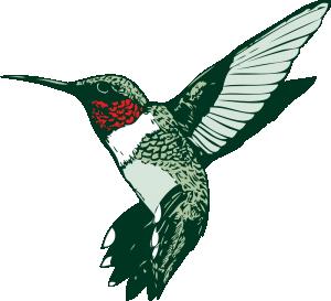 Realistic clipart ruby throated hummingbird #8