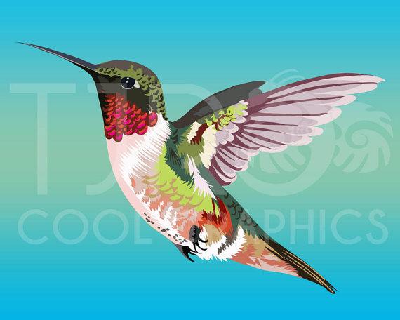 Realistic clipart ruby throated hummingbird #15