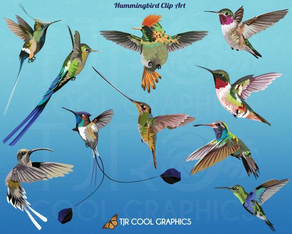 Realistic clipart ruby throated hummingbird #14