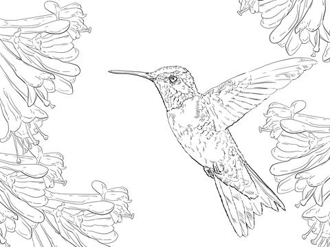 Realistic clipart ruby throated hummingbird #12