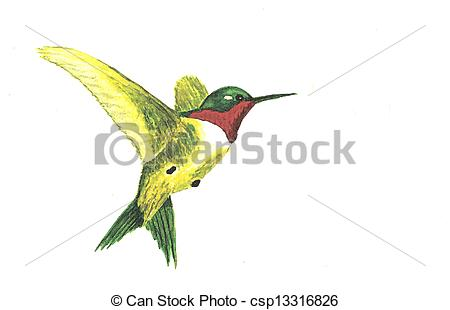 Realistic clipart ruby throated hummingbird #5