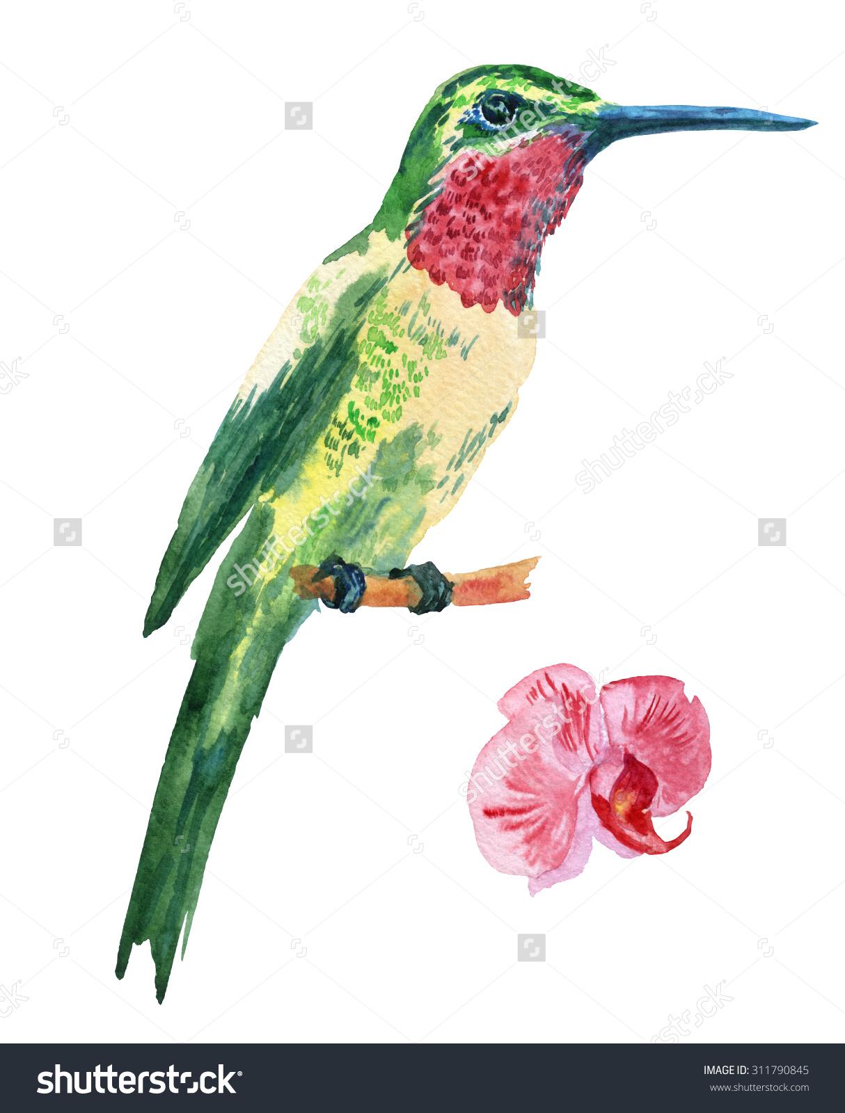 Realistic clipart ruby throated hummingbird #10