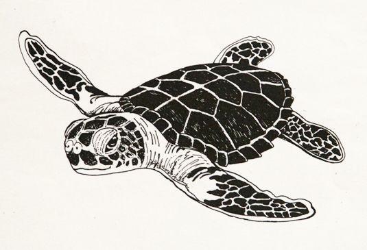 Drawn sea turtle black and white On library Tattoo Download Drawing