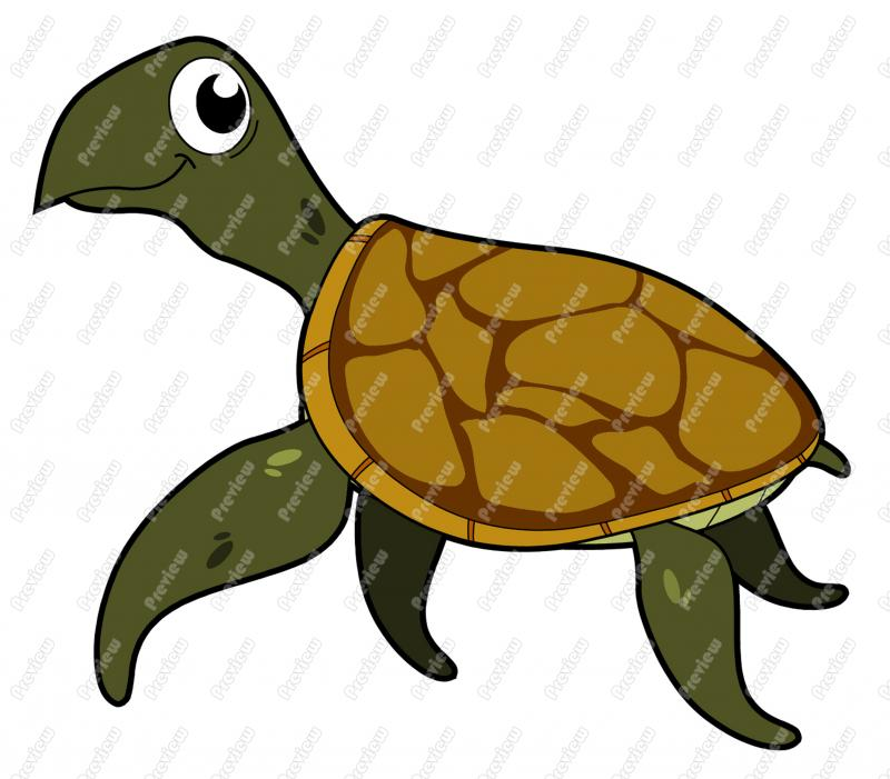Sea Turtle clipart box turtle #7