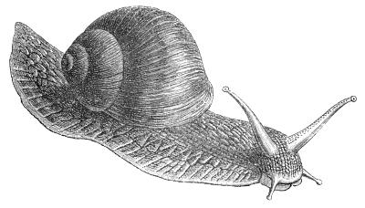 Drawn snail clip art 1 Clipart Public of Clipart