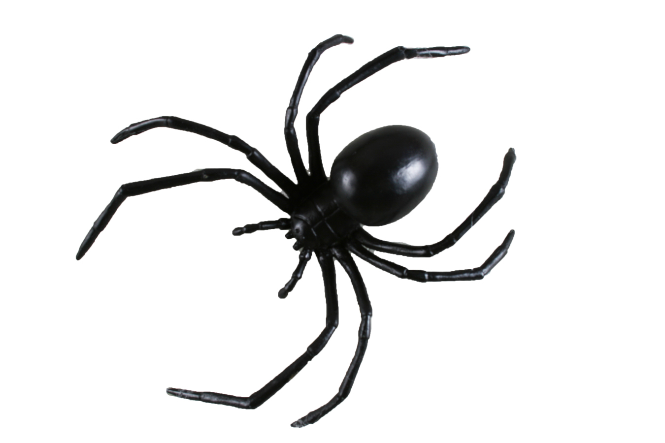Black Widow clipart animated And Horror  Masks Halloween