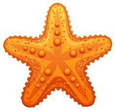 Realistic clipart starfish Colorful Art online Seashell Ocean