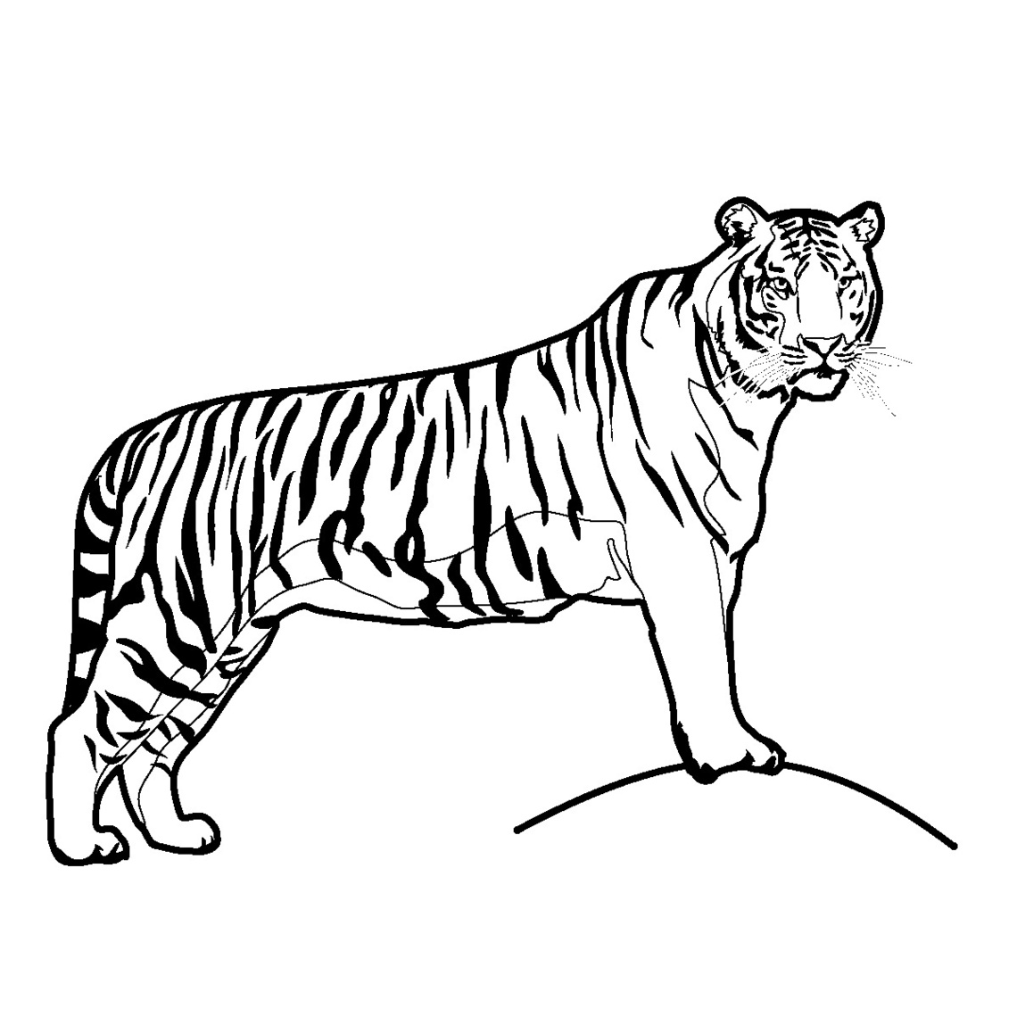 Tiiger clipart black and white #15