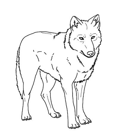 Arctic Wolf clipart color Print Realistic images 14 Wolf