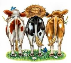 Rear clipart cow Back Pinterest Cows and Anatomy