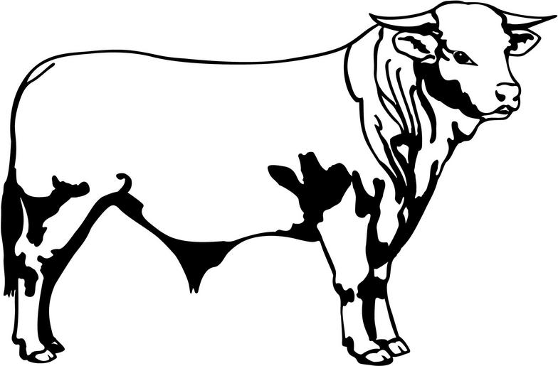 Beef clipart hereford cow Bulls Download clipart Download #6