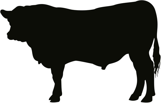Cattle clipart angus cow Red Red Download Bull Clipart