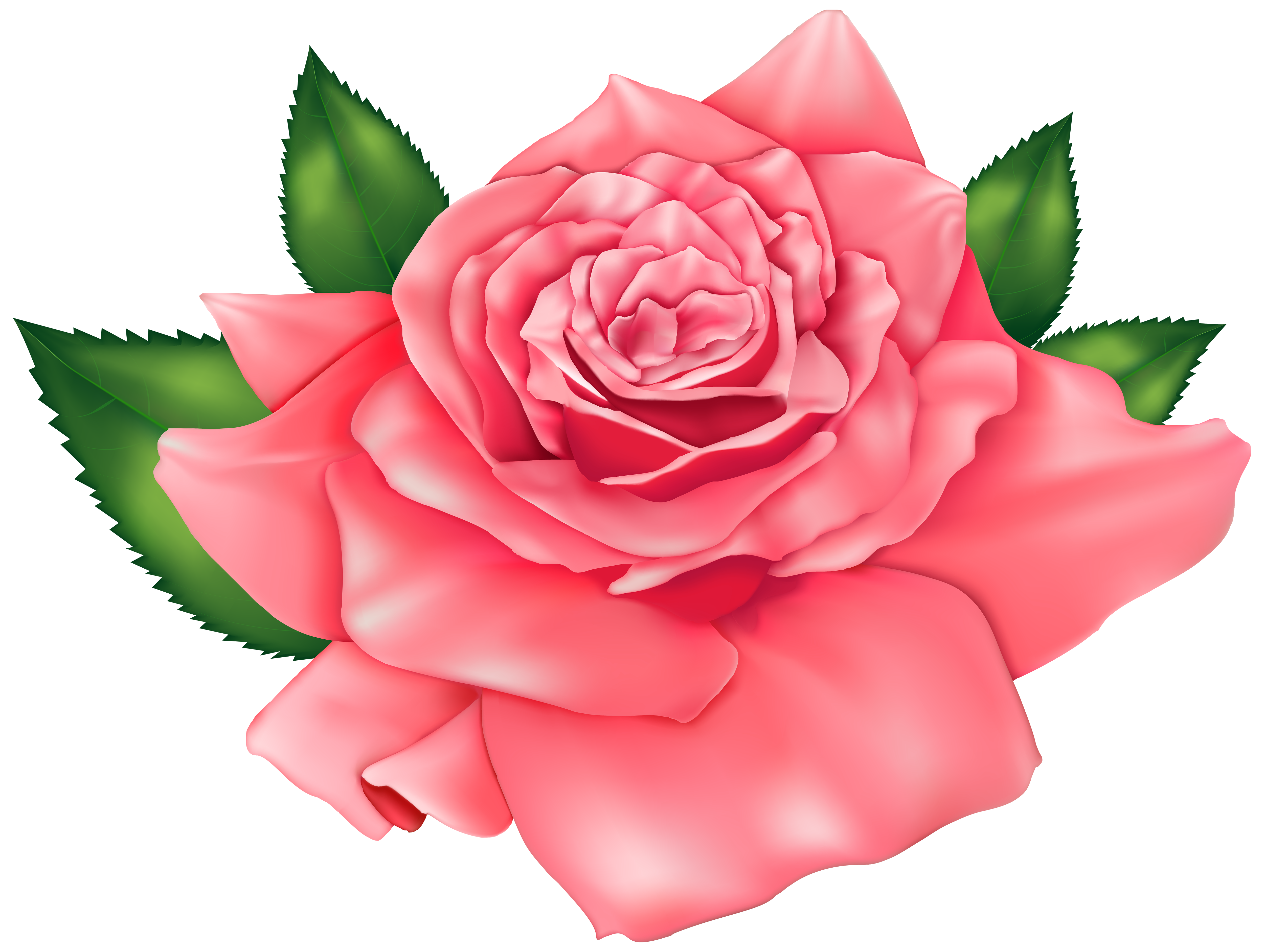 Beautiful clipart rose plant Clipart Gallery Beautiful PNG Pink