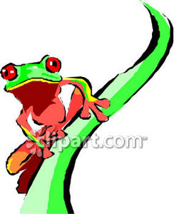 Red Eyed Tree Frog clipart australian Panda Art red Clipart Clip