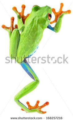 Tree Frog clipart rainforest animal #3